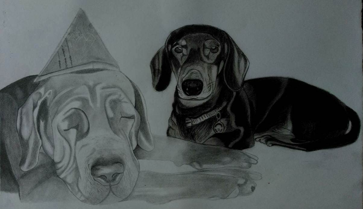 dog sketch artist